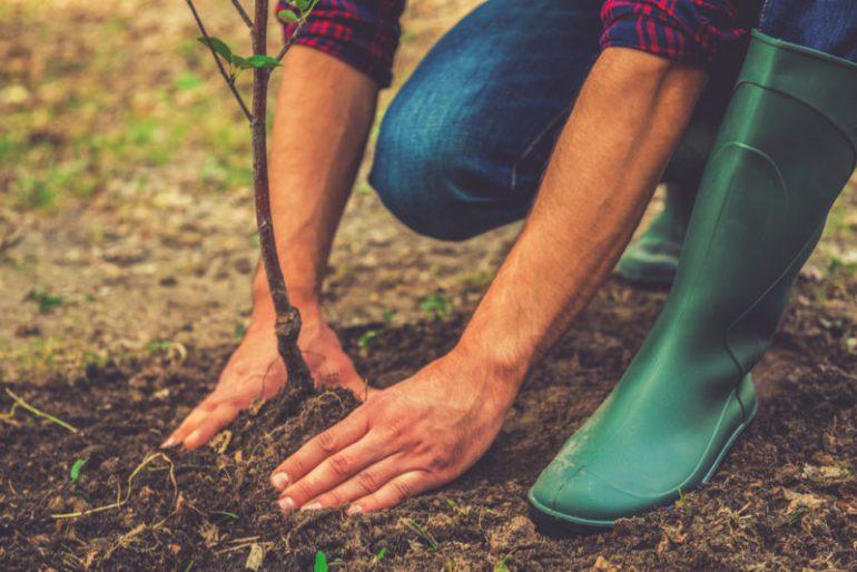 Sfaturi utile pentru plantarea pomilor fructiferi