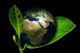Curiozitati despre mediu